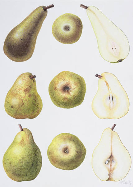 Fruit Painting - Six Pears by Margaret Ann Eden