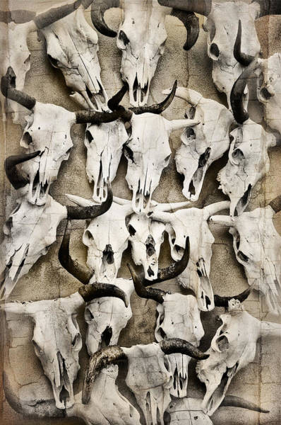 Photograph - Skull Art by Pamela Steege