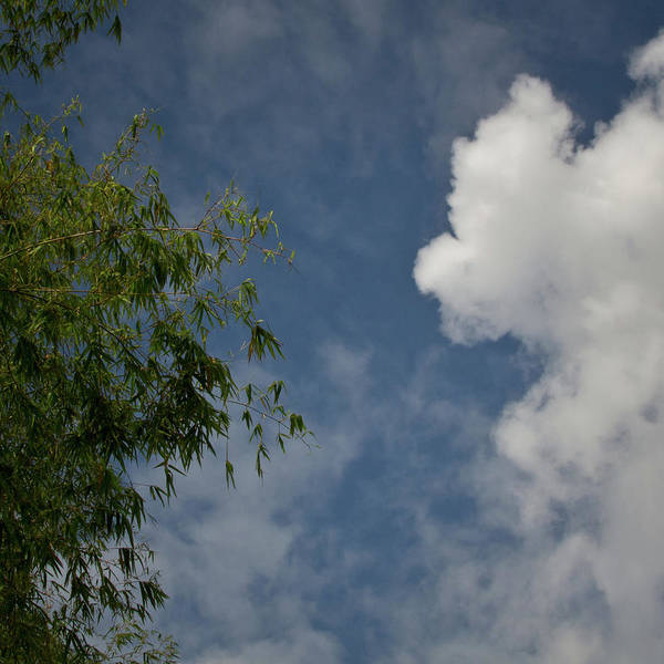 Photograph - Sky Introduces Tree To Cloud by David Coblitz