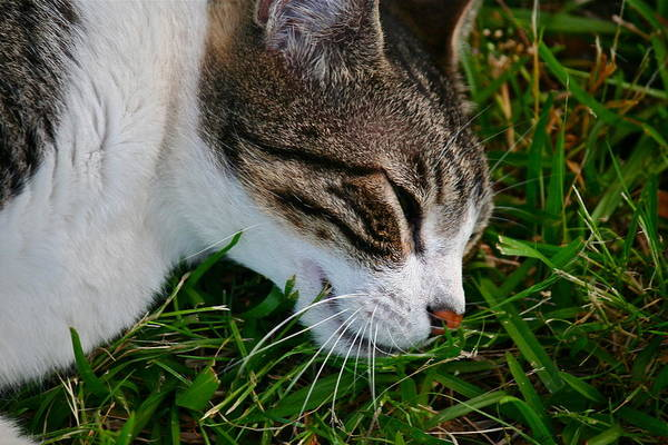 Photograph - Sleeping Cat by Jim Albritton