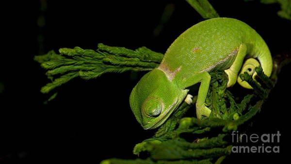 Photograph - Sleeping Green by Mareko Marciniak