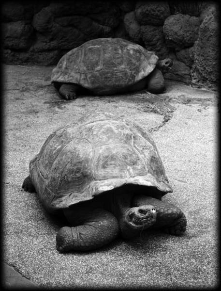 Tortoise Shell Photograph - Slow Down by Ricky Barnard