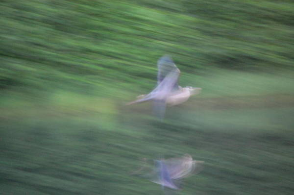 Photograph - Slow Evening Shutter by Mary McAvoy