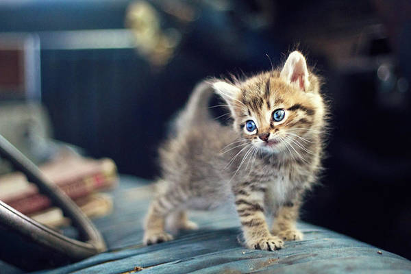 Cute Photograph - Small Cute Kitten by Malcolm MacGregor