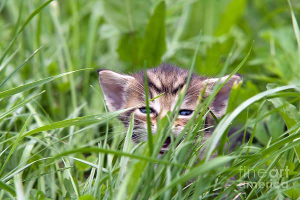 Wall Art - Photograph - Small Kitten In The Grass by Michal Boubin