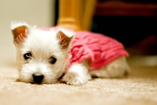 Dog Photograph - Small Puppy Sleeping On Mat by James DiBianco Jr