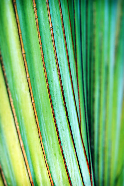 Photograph - Smooth Tropical Palm by Marilyn Hunt