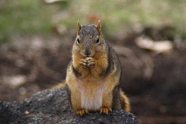 Photograph - Snacking Again by Ben Upham III