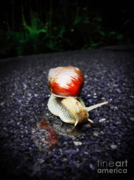 Digital Art - Snail On Walkway by Lisa Redfern