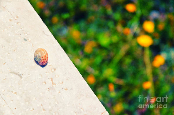 Wall Art - Photograph - Snail On White Wall by Silvia Ganora