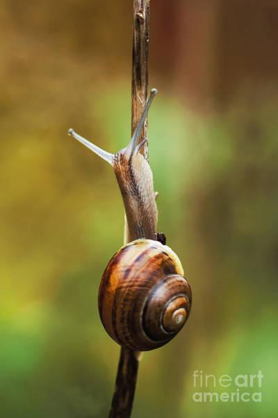 Wall Art - Photograph - Snail by Wedigo Ferchland