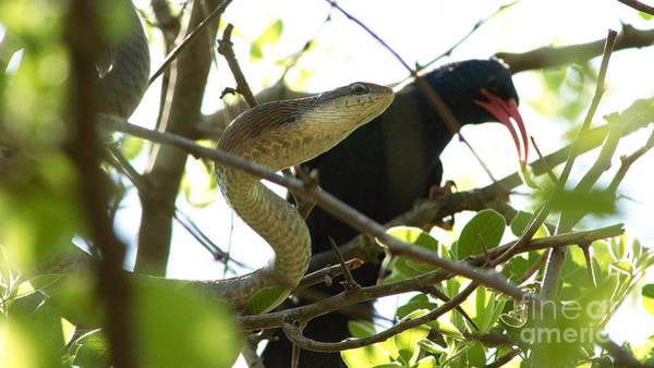 Photograph - Snake And Bird by Mareko Marciniak