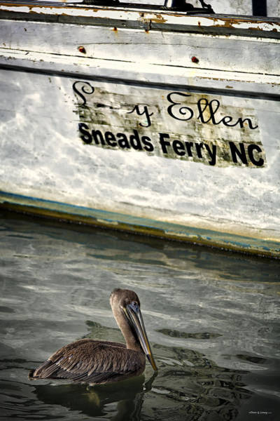 Wall Art - Photograph - Sneads Ferry Pelican by Denis Lemay