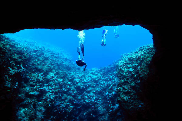 Free Dive Wall Art - Photograph - Snorkelers Tentatively Examine by Jason Edwards