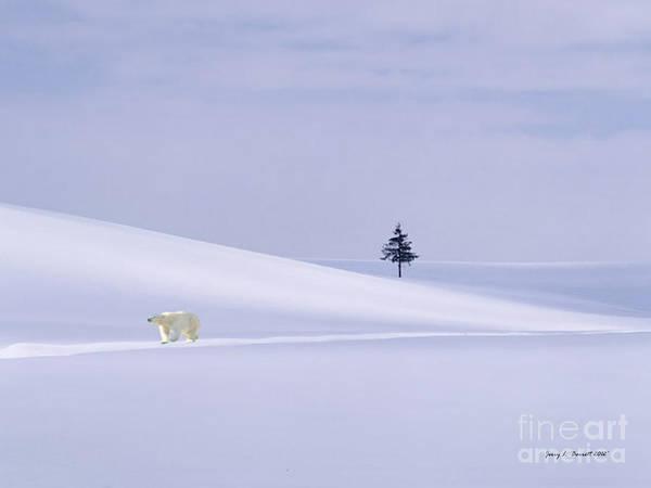 Mixed Media - Snow Bear by Jerry L Barrett