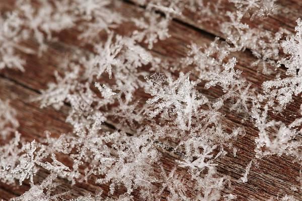 Christy Photograph - Snow Close Up by Christy Patino