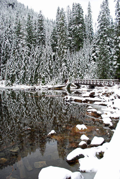Wall Art - Photograph - Snow Covered Pines On Lake 22 by Twenty Two North Photography
