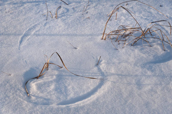 Tallgrass Wall Art - Photograph - Snow Covered Prairie by Steve Gadomski