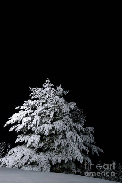 Nightime Photograph - Snow-covered Tree by HD Connelly