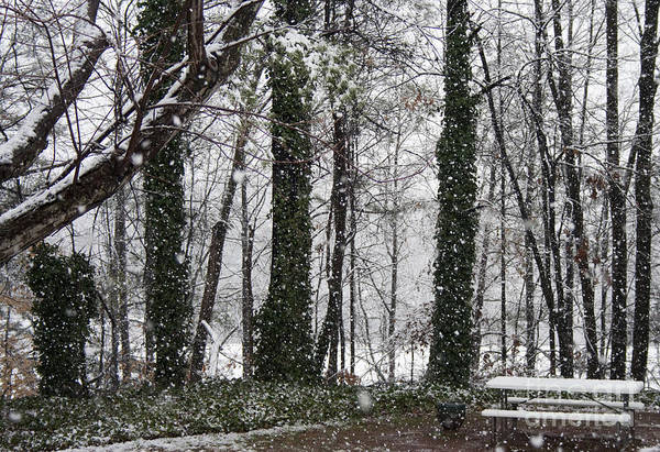 Photograph - Snow In Atlanta by Michael Waters
