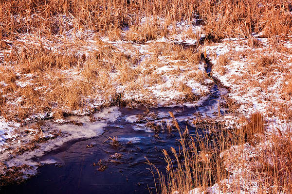 Photograph - Snow In Cape May Meadow by Tom Singleton