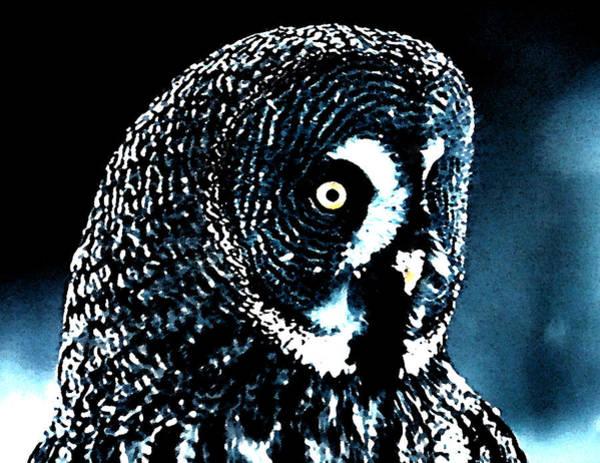 Painting - Snow Owl by Colette V Hera  Guggenheim