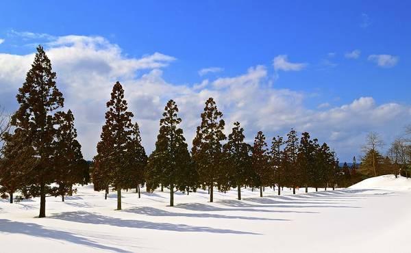 Cedar Tree Photograph - Snow Scenery by Kurosaki San