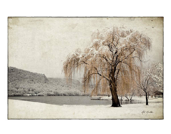 Photograph - Snow Tree 1 by Al  Mueller