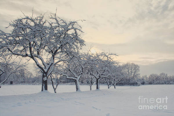 Photograph - Snow Trees by Jutta Maria Pusl