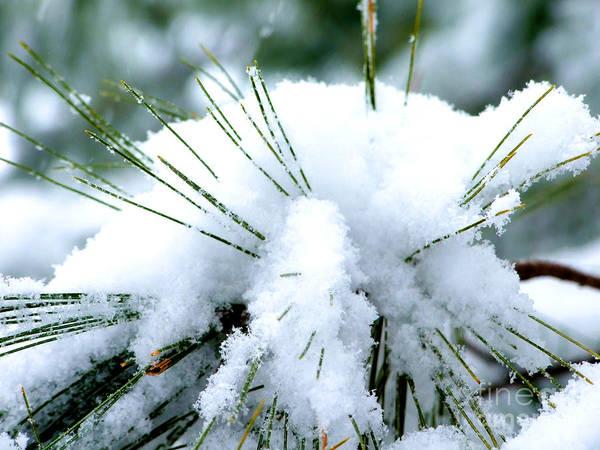 Photograph - Snow Urchin Photograph by Kristen Fox