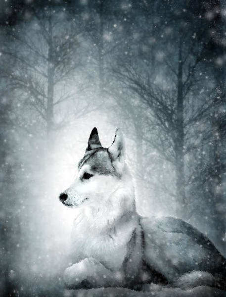 Woodland Animals Mixed Media - Snow Wolf by Svetlana Sewell