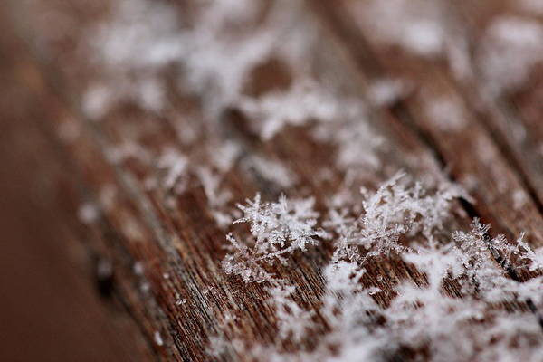 Christy Photograph - Snowflakes On My Deck by Christy Patino