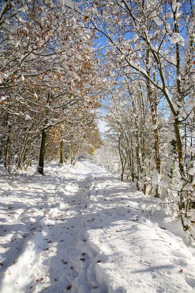 Photograph - Snowpath by David Birchall