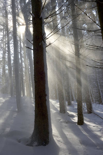 Photograph - Snowy Forest In Morning Sun, Bavaria by Konrad Wothe