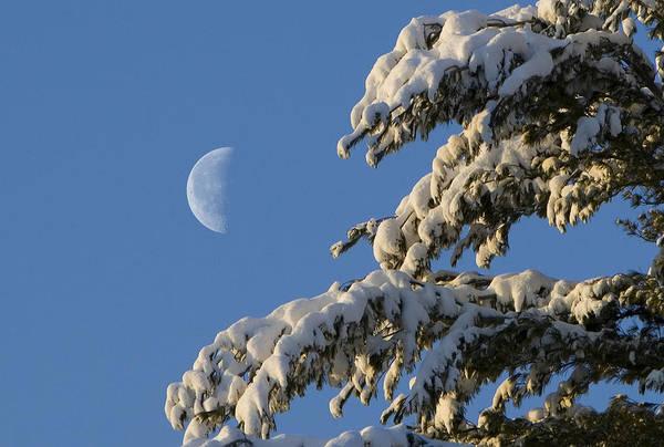 Photograph - Snowy Moon by Larry Landolfi