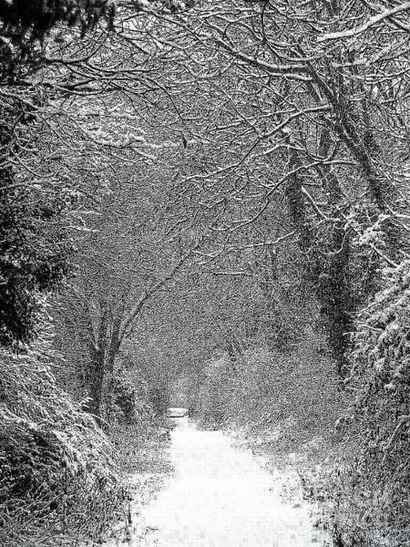 Ivanhoe Photograph - Snowy Path by Linsey Williams