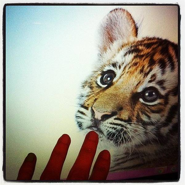 Wall Art - Photograph - So Cute!!!! #cute #yummy #love by May Pinky  ✨