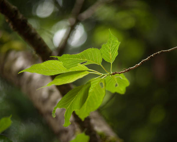 Arboretums Photograph - Soaring Leaves by Mike Reid