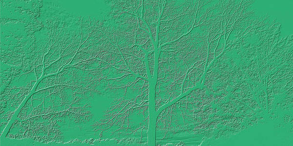 Photograph - Soft Green Embossed Trees by Sheila Kay McIntyre
