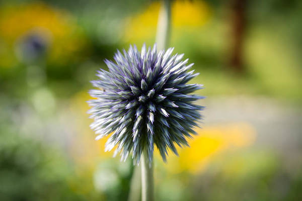 Photograph - Soft Spike by Andreas Levi