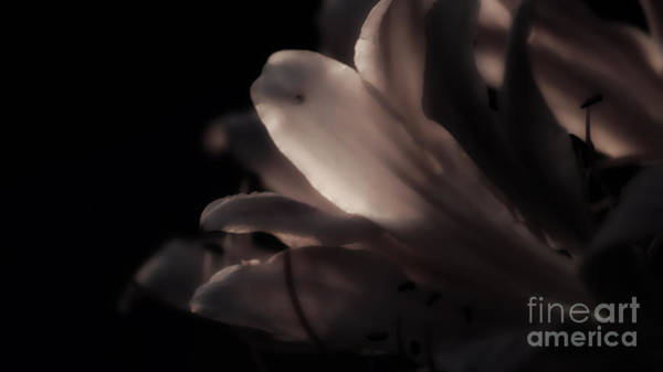 Surprise Lily Photograph - Softly Silhouetted Surprise by Julie Clements