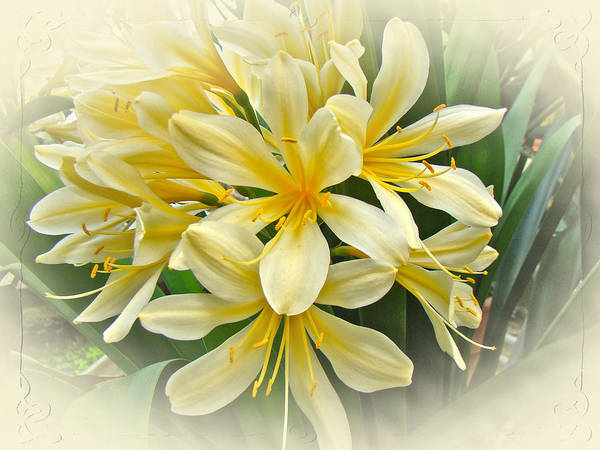 Clivia Wall Art - Photograph - Softly Yellow by Mother Nature
