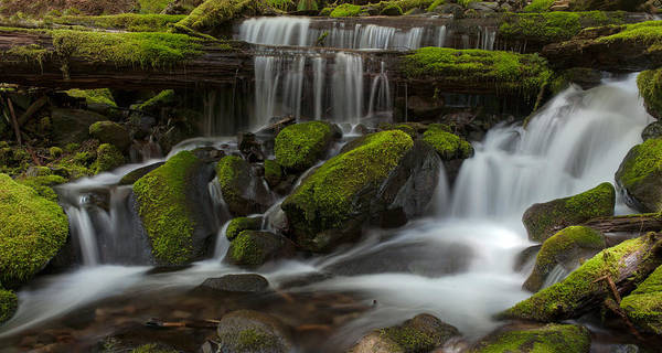 Olympics Photograph - Sol Duc Stream by Mike Reid