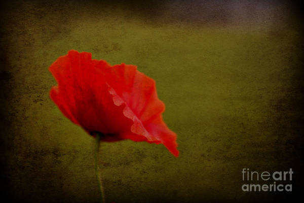 Photograph - Solitary Poppy. by Clare Bambers