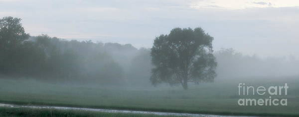 Photograph - Solitary Tree Stands Firm In A Foggy Field After An Early Evening Rain Shower - Landscape by Angela Rath