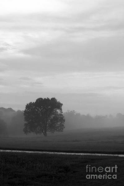 Photograph - Solitary Tree Stands Firmly In A Foggy Field After An Early Evening Rain Shower In Black And White by Angela Rath