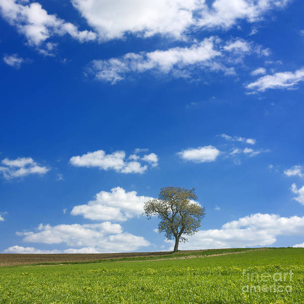 Solitary Photograph - Solitary Tree In Green Meadow by Bernard Jaubert