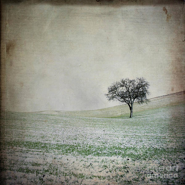 Singly Photograph - Solitary Tree In Winter. Auvergne. France. Europe by Bernard Jaubert