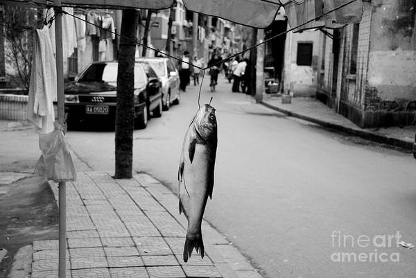Wall Art - Photograph - Something Fishy by Dean Harte