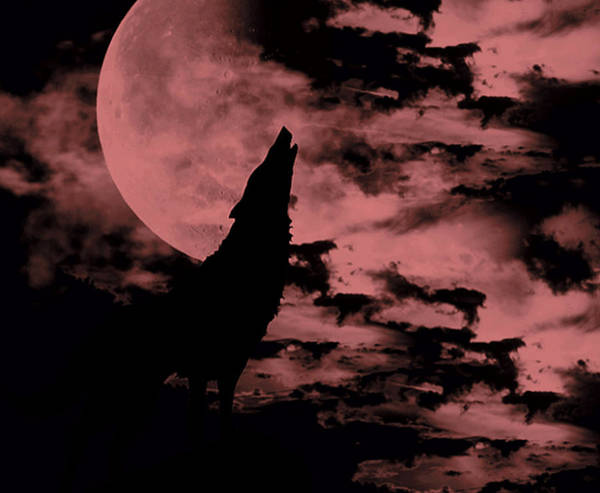 Wall Art - Photograph - Song Of The Wolf  by Lourry Legarde